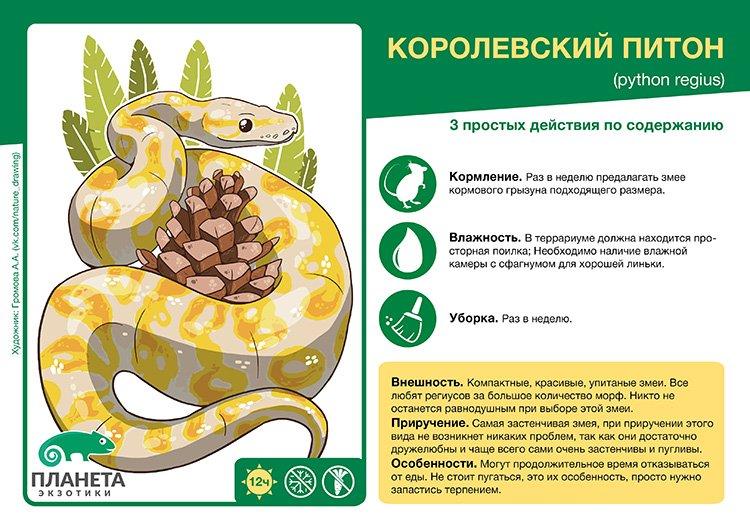 kartochka-korolevskiy-piton.jpg