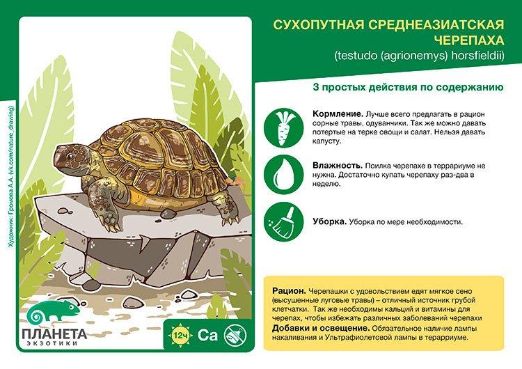 kartochka-sukhoputnaya-sredneaziatskaya-cherepakha-1-1.jpg