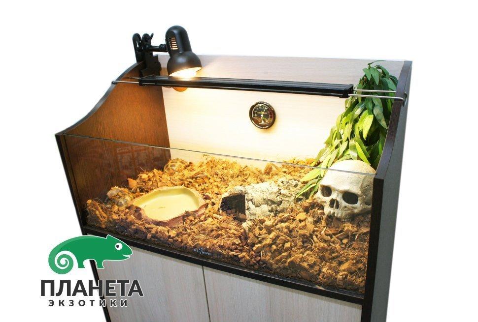 Размеры террариума для сухопутных черепах